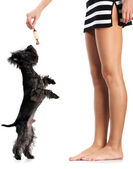 Woman and dog — Stock Photo