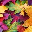 Autumnal background from maple leaves — Stock Photo