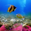 Stock Photo: Exotic fishes