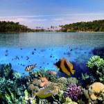fotografie z korálů — Stock fotografie