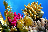 Coral reef of Red Sea — Stock Photo