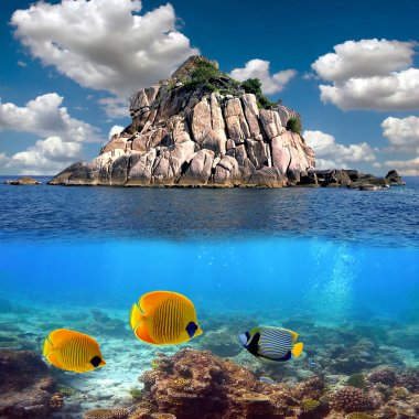 Tropical paradise and corals on a reef top