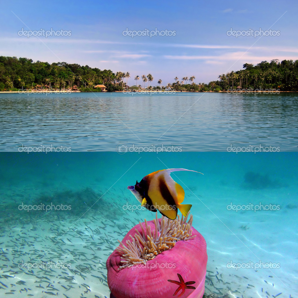 Tropical Island Paradise: Stock Photo © Vlad61 #3922365