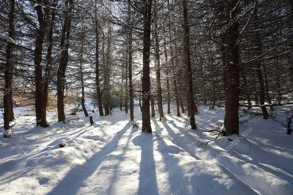 Winter sun casting shadows in the snow in the Scottish Highlands.  Lizenzfreies Foto #3612994