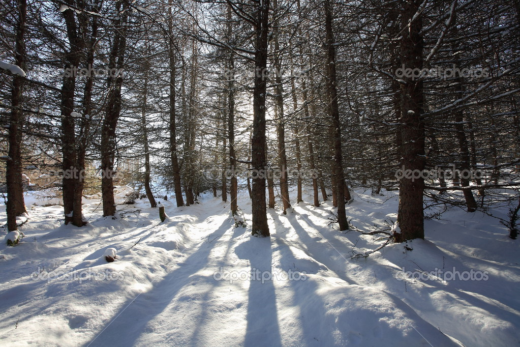 Winter sun casting shadows in the snow in the Scottish Highlands. — Stock Photo #3612994