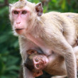 Foto Stock: Monkey and baby