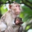 Stock Photo: Monkey and baby