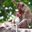 Stockfoto: Monkey and baby