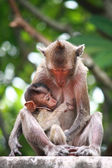 Monkey and baby — Stock Photo
