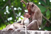 Monkey and baby — Stock Photo