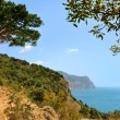 Juniper tree on the slope near the sea - Stock Photo