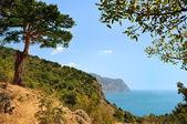 árvore de zimbro na encosta perto do mar — Fotografia Stock