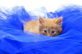 Red kitten on blue textile — Stock Photo