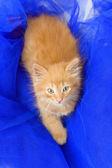 青い繊維赤い子猫 — ストック写真