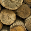 Piles of Firewood background — Stock Photo