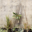 Planting in front of a wall - Stock Photo