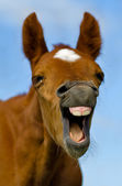 Laughing Horse — Stock Photo