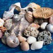 Muschelkreation - Stock Photo