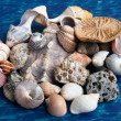Muschelkreation — Stock Photo #3584672