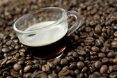 Cup of coffee on coffee beans — Stock Photo