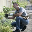 Gardener at work — Stock Photo
