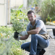 Foto Stock: Gardener at work