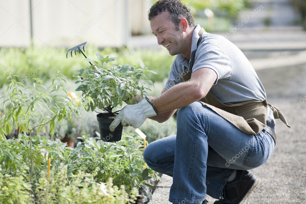 Smiling gardener in a greenhouse — Stock Photo #4209678