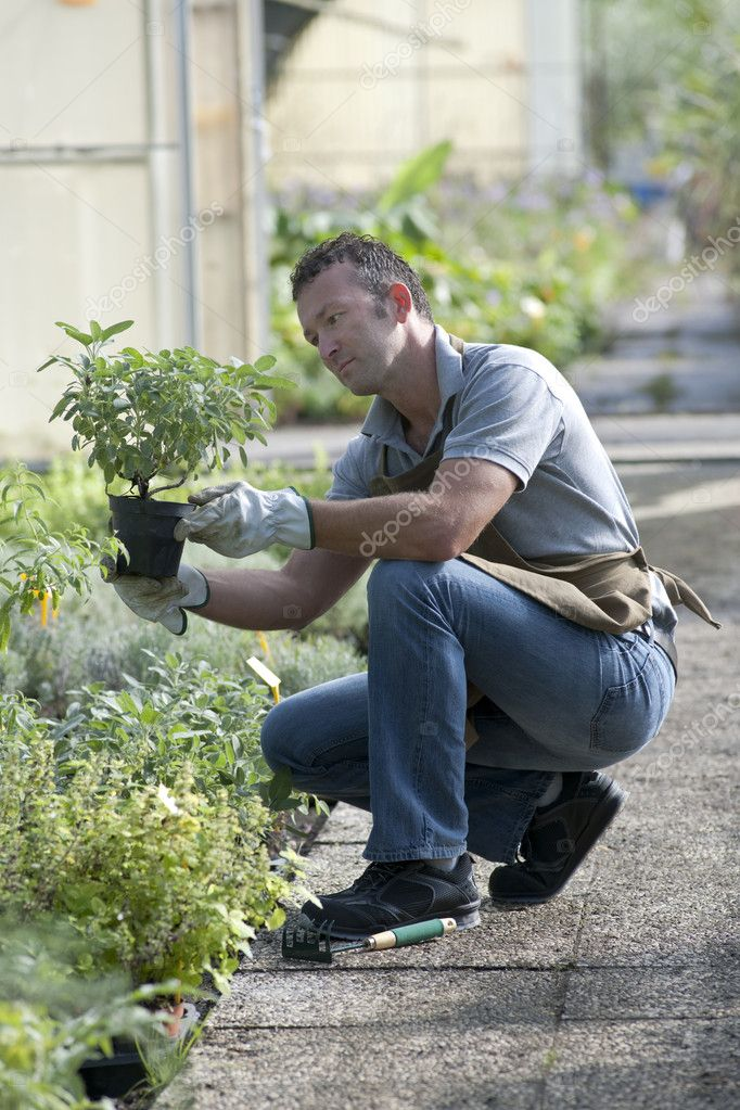 Gardener in a green house  Stock Photo #4209714