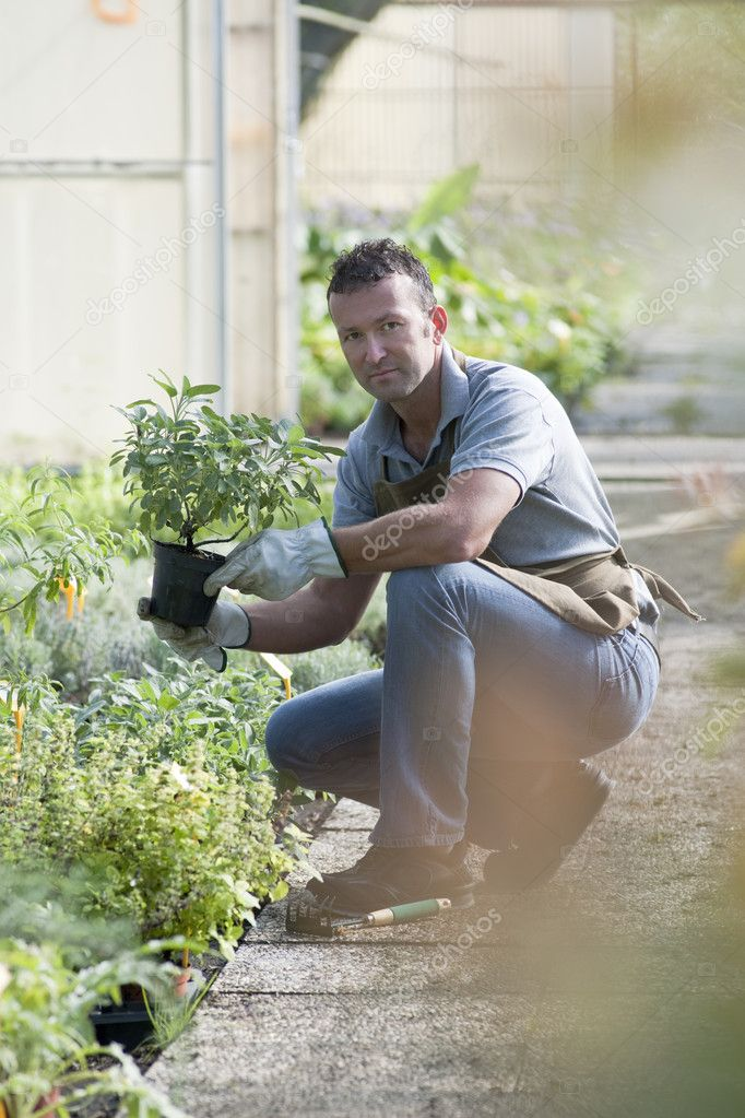 Gardener in a green house — Stock Photo #4209754