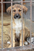 Puppy locked in the cage — Stock Photo