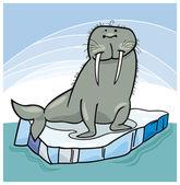 Walrus on floating ice — Stock Vector