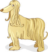 Afghan hound dog — Stock Vector