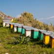 Beehives in summer - Stock Photo