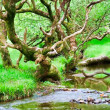 Glendalough forest — Stock Photo
