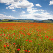 Romanian countryside with poppy field — Stock Photo