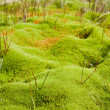 Vegetation in a bog — Stock Photo