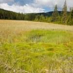 Beautiful bog in Romania — Stock Photo
