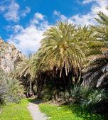 Forêt de palmiers de preveli — Photo