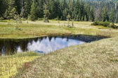 Molhas gran pantano — Foto de Stock