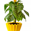Houseplant — Stock Photo