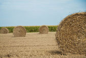 Haystack or hayrick on a field — Stock Photo