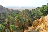 Oasis in Sahara — Stock Photo