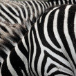 Stock Photo: Zebra stripes.