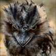 Stock Photo: Frogmouth.