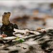 Lizard on sand. — Stock Photo