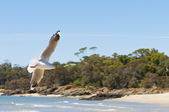 Seagull spreads its wings on the beach — Stock Photo
