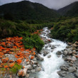 Goat Creek in the storm, Arthur's Pass National Park, New Zealand — Stock Photo