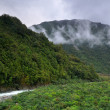 Rainforest in Otira valley, Arthur's Pass National Park, New Zeala — Stock Photo #3780228