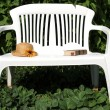 White bench. — Stock Photo