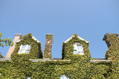 Ivy roof top — Stock Photo